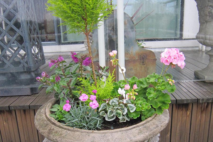 Garden maintenance londonboxing beautiful for Beautiful gardens and maintenance