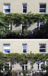 House front with before and after pruning pics