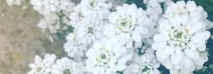 white_slider